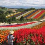 北海道美瑛、四季彩の丘